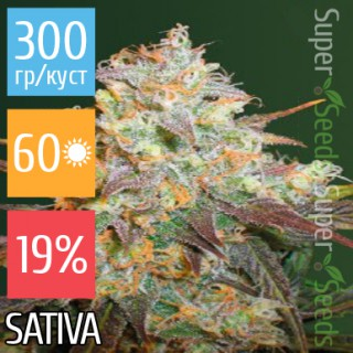Семена Конопли Victory Seeds Chocodope Feminised