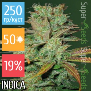 Семена Конопли Victory Seeds Seemango Feminised