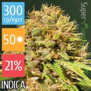 Семена Конопли Victory Seeds Super Mazar Feminised