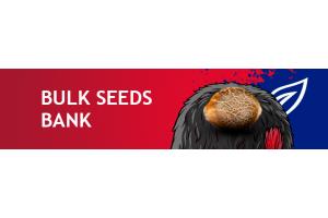 Новые сорта от Bulk Seed Bank