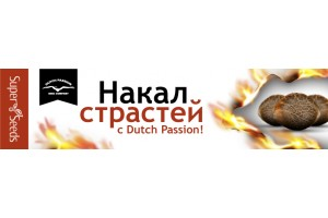 Накал страстей с Dutch Passion