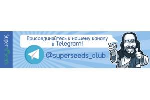 Super Seeds теперь и в Telegram!